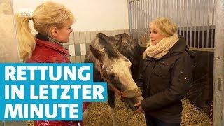 Tatjanas Tiergeschichten: Pferderettung