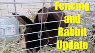 Fencing and Rabbit Update