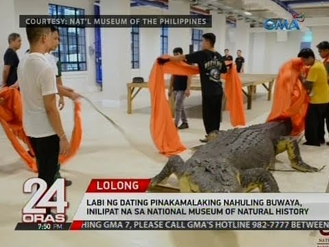 24 Oras: Lolong, inilipat na sa National Museum of Natural History