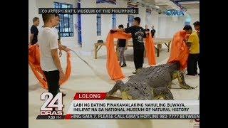 24 Oras: Lolong, inilipat na sa National Museum of Natural History