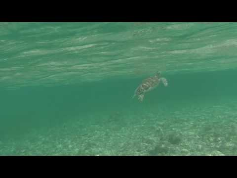 Swimming with Sea Turtles 2