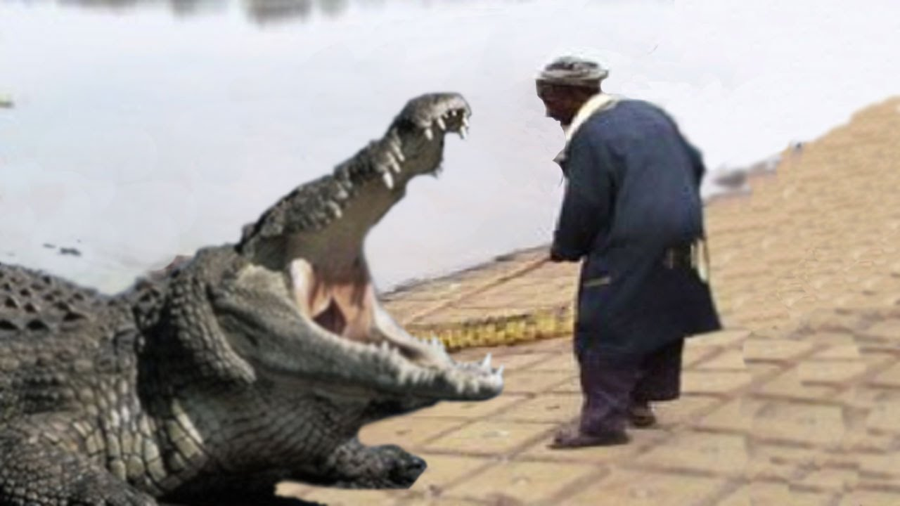 A Man Getting Eaten By Alligator
