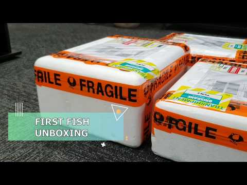 Fish Unboxing! [Endangered Fish] From Liverpool Creek #unboxing #aquascape #fish #aqualife