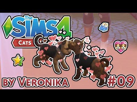 PÁŘENÍ, ALEX A TŘI HVĚZDIČKY   Let's Play - The Sims 4 Psi a kočky (9.část)