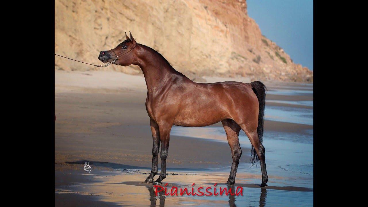 Dlaczego Konie Arabskie W Najbardziej Znanej Stadninie Na świecie W