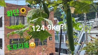 [봉숭아 초초고도비만 124.9kg 다이어트 vlog …