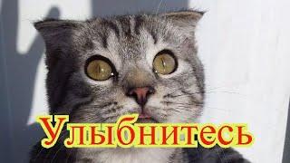 Смешные коты Приколы с котами Кошки Позитив Собаки Создай себе хорошее настроение