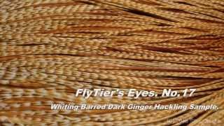 "[HD] Fly tying / Whiting Barred Dark Ginger Hackling Sample video. ""FlyTier's Eyes. No.17"""