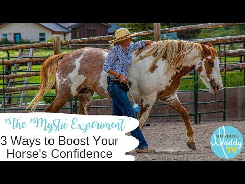 3 Ways to Boost Your Horse's Confidence