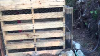 Chicken coop made out of pallets.