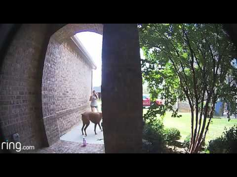 Fun with Ring Doorbell