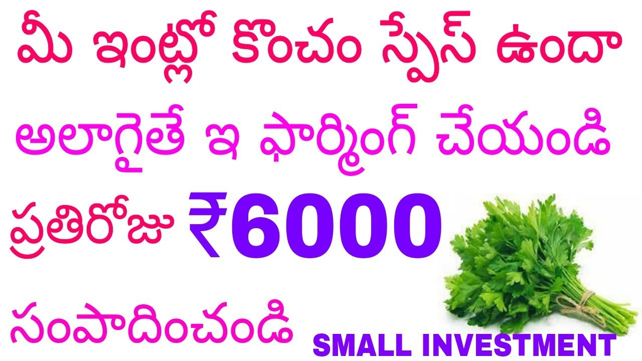 Small Business ideas 2018 : Coriander Farming Business | Kothimeera ...