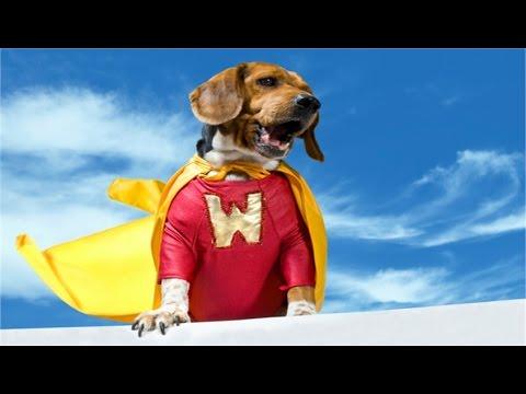 5 Cases of Dog Heroism (in HD!!!)