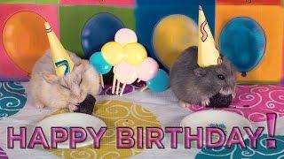 Happy Birthday Dumptruck and Porkchop