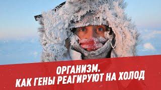 Как гены реагируют на холод - Организм