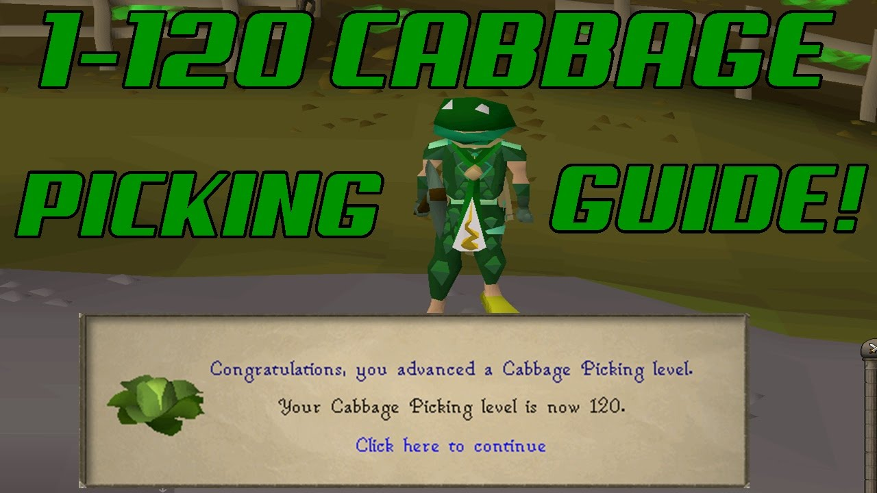 runescape 2007 ultimate 1 120 cabbage picking guide best xp rates make money from cabbage youtube