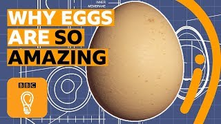 Do eggs contain the secrets of the universe? | BBC Ideas