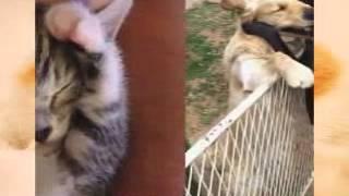 Видео про кошек и собак!!!