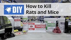 Rodent Control Overview - How to Kill Rats & Mice