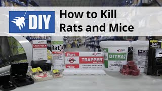 Rodent Control - How to Kill & Get Rid of Rats & Mice