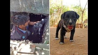 Puppy trapped and drowning deep in sewage line rescued