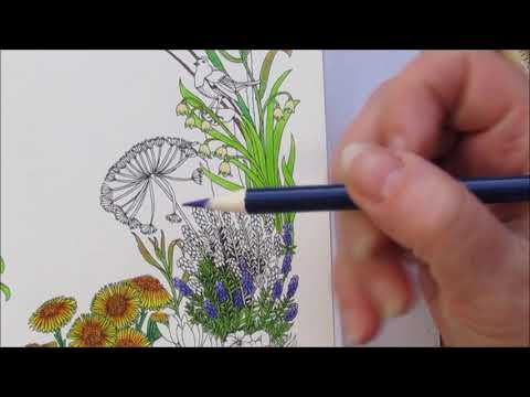coloring-book--the-flower-year--february