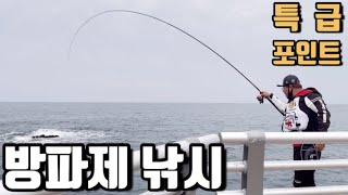 방파제에서 짬낚으로 즐기는 벵에돔/돌돔/무늬오징어 낚시…