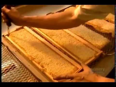 Как продать свой мед? Ответ прост-торговля на рынке.14 янв. 2017г .