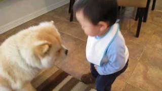 Baby making interesting conversation with dog thumbnail