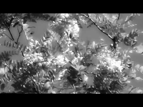 EDVARD GRIEG, 2 Elegiac melodies Op. 34: No.2