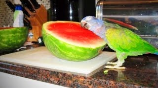 Funny Parrots 🐦 😂  Cute and Awesome Parrots (Full) [Fu...