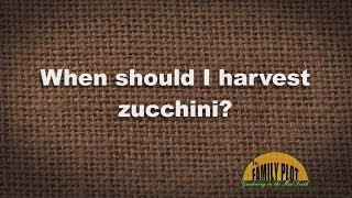 Q&A - When Should I Harvest Zucchini?