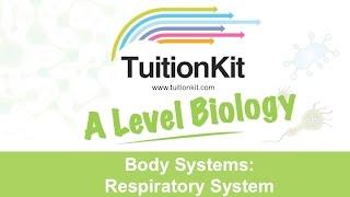 Body Systems: Respiratory System (A Level Biology)