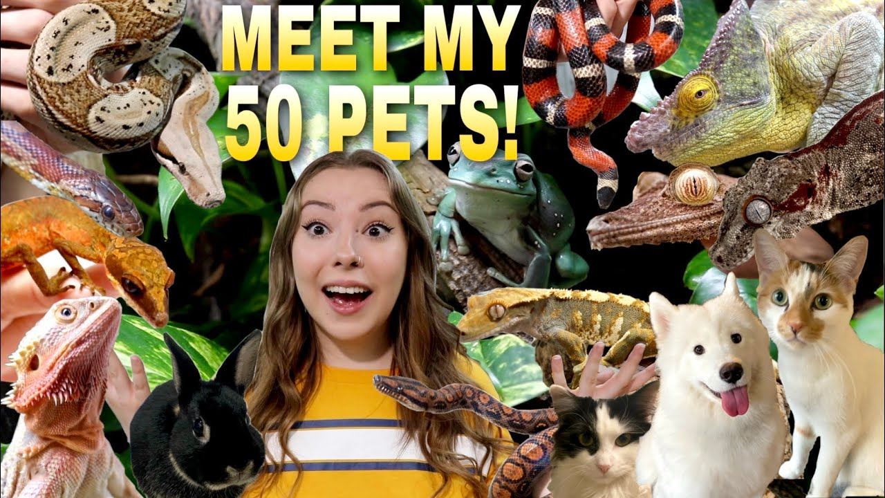 Download Meet All Of My Pets! 50+ Animals!