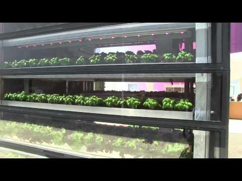 ENEA Channel - Agricoltura sostenibile: la Vertical Farm made in Italy