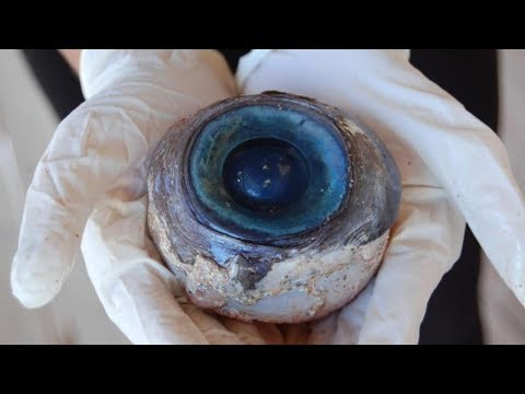 STRANGEST Things Found In American Waters!