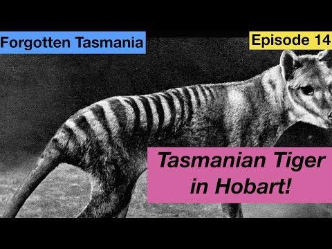 Tasmanian Tiger In Hobart - Forgotten Tasmania Episode 14