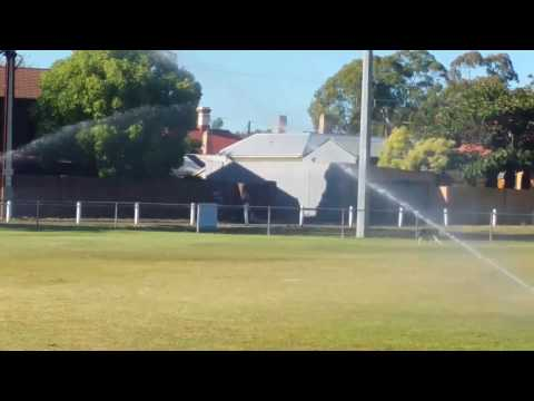 Husky X Kelpie playing with sprinkler