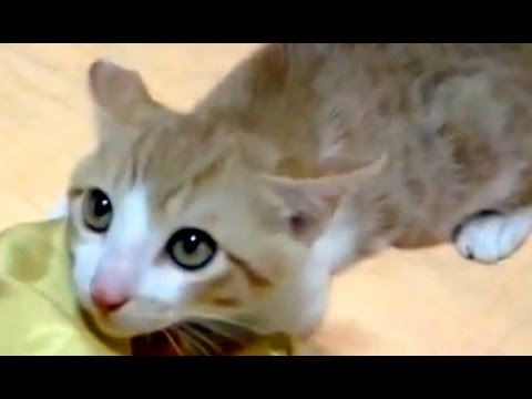 Poor Kitten Scared by Barking Dog