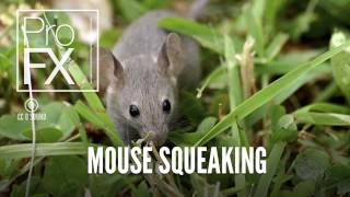 Mouse squeaking sound effect | ProFX (Sound, Sound Effects, Free Sound Effects)
