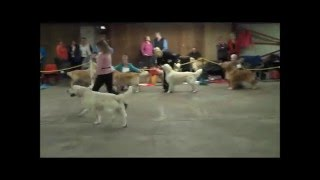 This Video Previously Contained A Copyrighted Audio Track. Due To A Claim By A Copyright Holder, The Audio Track Has Been Muted.     The Northern Golden Retriever Club October 17th, 2009 ~ Sh Ch Gunhills January Master