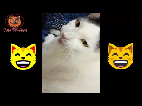 This Cat Can Sing Song | Cat Singing Video | Cats and Kittens Video