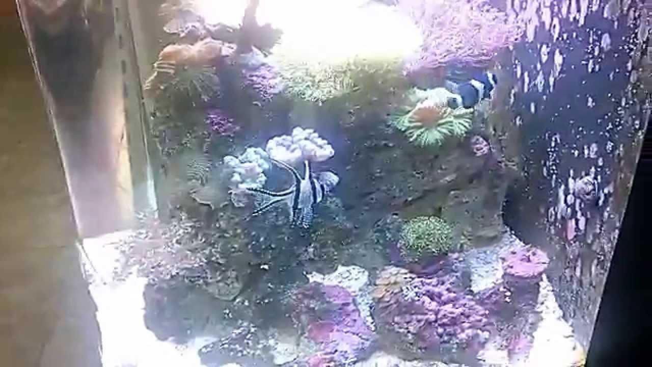 Aquario marinho boyu mt508 by zaiaquarios.