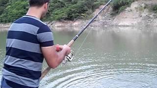 yayın balığı avı