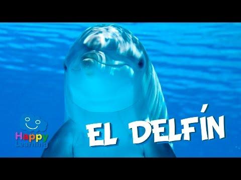 El Delfín   Videos Educativos para Niños