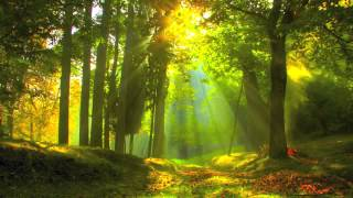 Summer Forest Sounds ~ 1 HOUR ~ Relaxation | SPA | Yoga | Zen | Reiki | Meditation | Study | Sleep