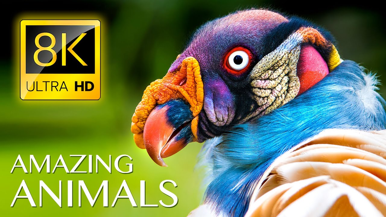 Amazing Wild Animals 8K ULTRA HD • Nature Sounds Relaxing Music with Birds Chirping