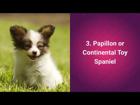 top-10-most-cutest-dog-breeds-in-the-world-2019