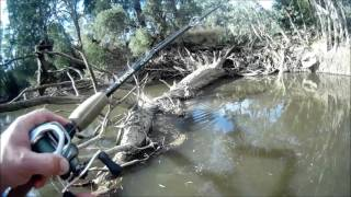 Exciting Murray cod fishing with heaps of fishing tips