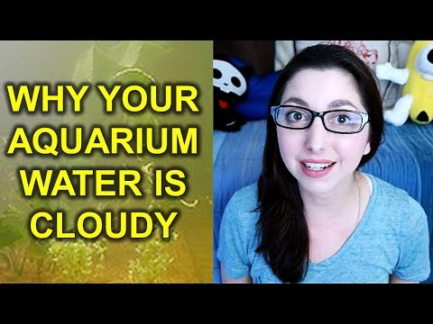 WHY YOUR FISH TANK IS CLOUDY | How To Fix Cloudy Aquarium Water And Get Crystal Clear Water
